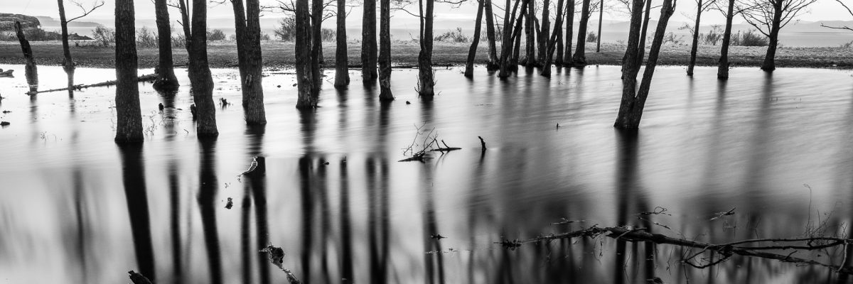 David A. Strand Photography